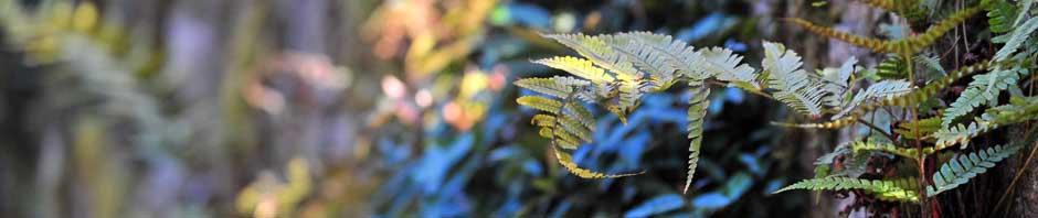 The Art Of Bonsai New England Bonsai Gardens